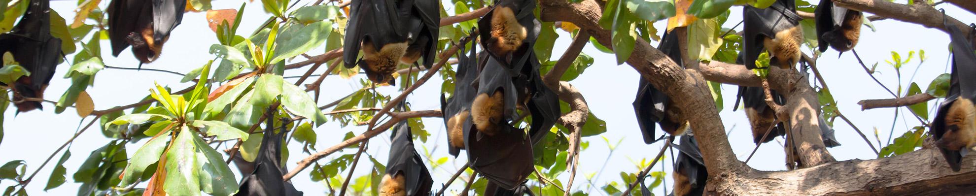 הרחקת עטלפים | סלע הדברה